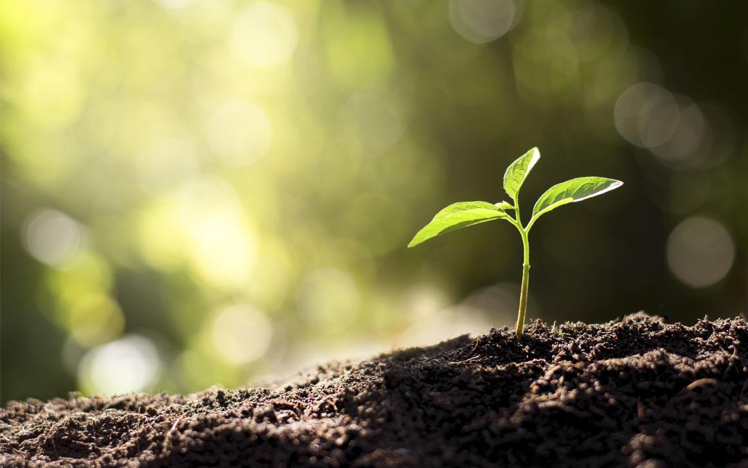 Responsabilidad medioambiental y economía circular