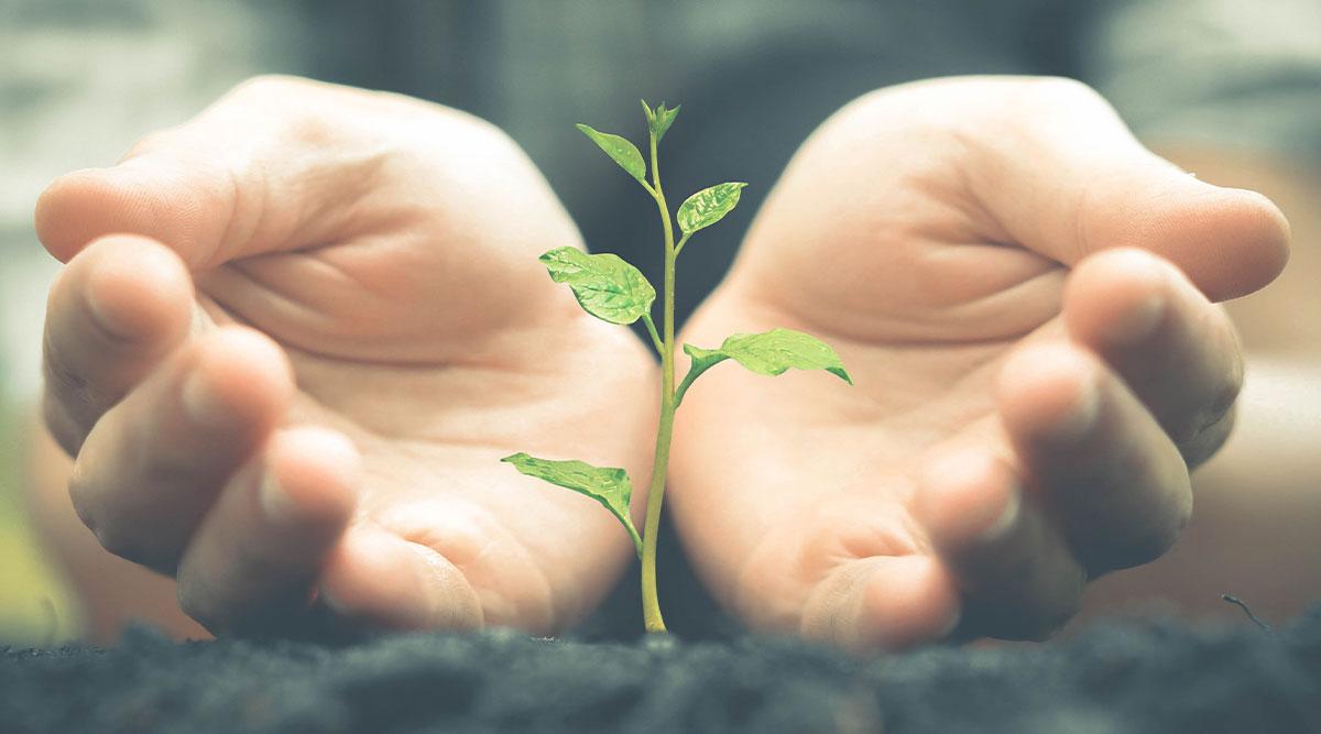 Planta creciendo entre las manos de una persona